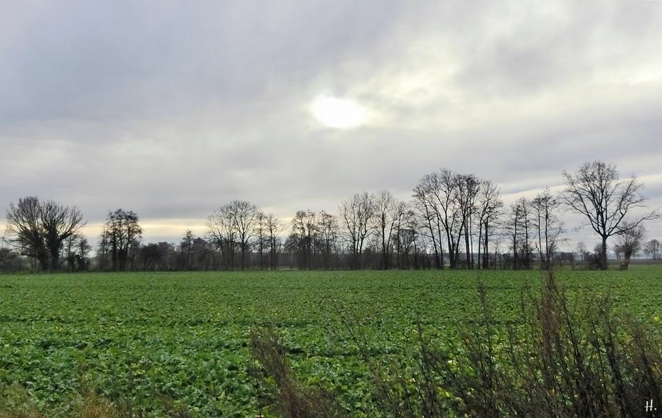 2020-12-15 LüchowSss Mittags-Spaziergang Feld + Bäume + Mittagshimmel