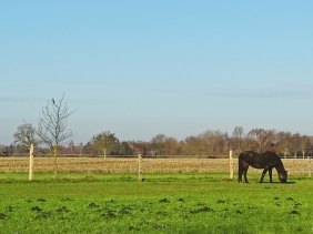 2020-12-18 bei LüchowSss Spaziergang Turmfalke + Pferd
