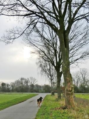 2021-01-02 b. LüchowSss 11h Spaziergang nicht ganz Mittagssonne + Bongo
