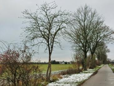 2021-01-07 LüchowSss Feldweg + weissliche Landschaft