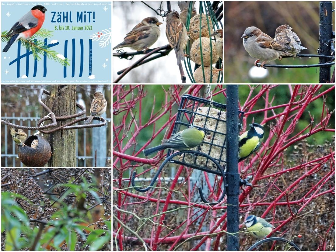 2021-01-09 LüchowSss Garten Vögel 1x5+1 ZählMitNABUVogelzählung