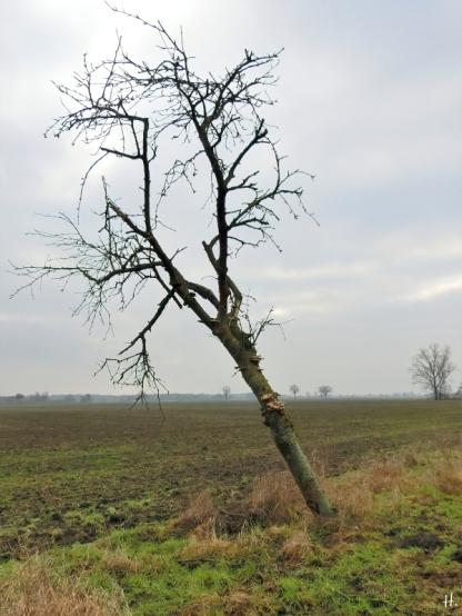 2021-01-10 b.LüchowSss abgest. Eberesche (Sorbus aucuparia)