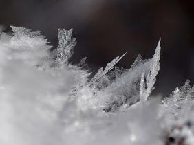 2021-01-31 b.LüchowSss Spaziergang Eisfederchen