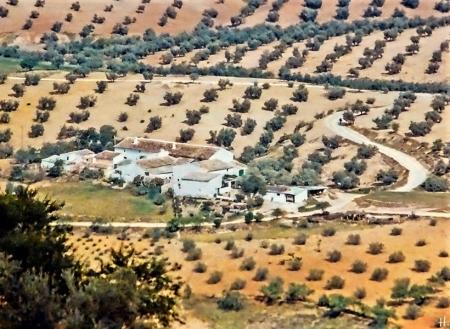 1983 Spanien Prov. Jaén, Umgebung v. Úbeda bzw. Torreperogil in den Cerros