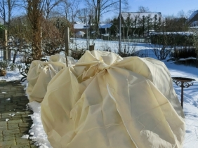 2021-02-10 LüchowSss Garten Rosmarin (Salvia rosmarinus), wieder eingehüllt