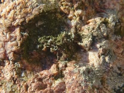 2021-02-21 LüchowSss Garten Schwarze Wegameise (Lasius niger) auf Granit
