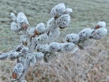 2021-03-02 LüchowSss morgens Nebel u. Frost, Weidenkätzchen