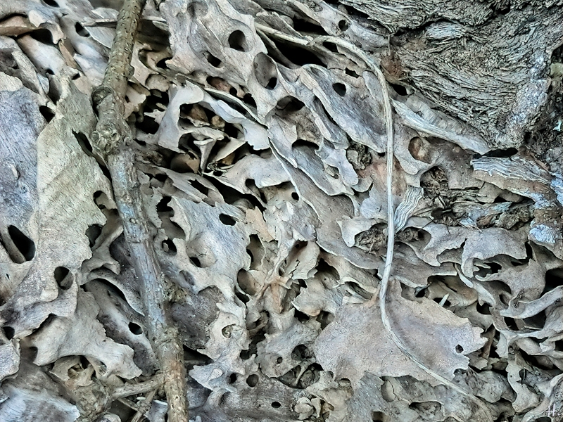 2021-03-21 LüchowSss Spaziergang zerfressenes Holz + Spinne