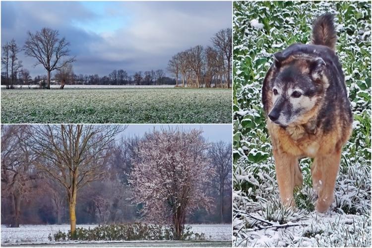 2021-04-07 LüchowSss morgens mit Schnee (1x3)