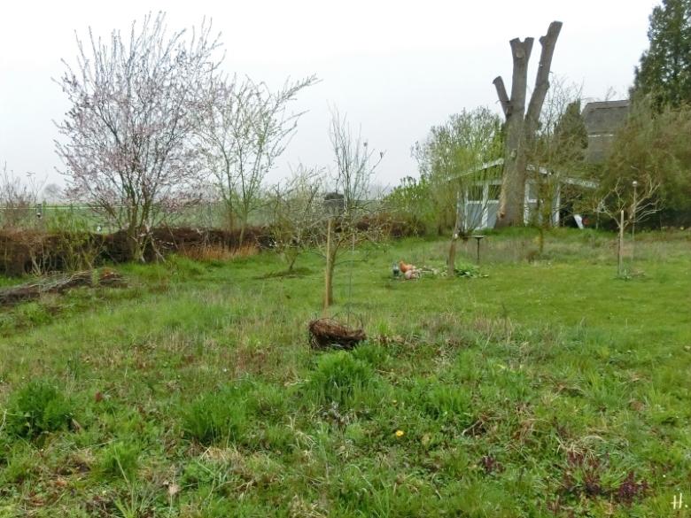 2021-04-19 LüchowSss Garten Wieseninseln