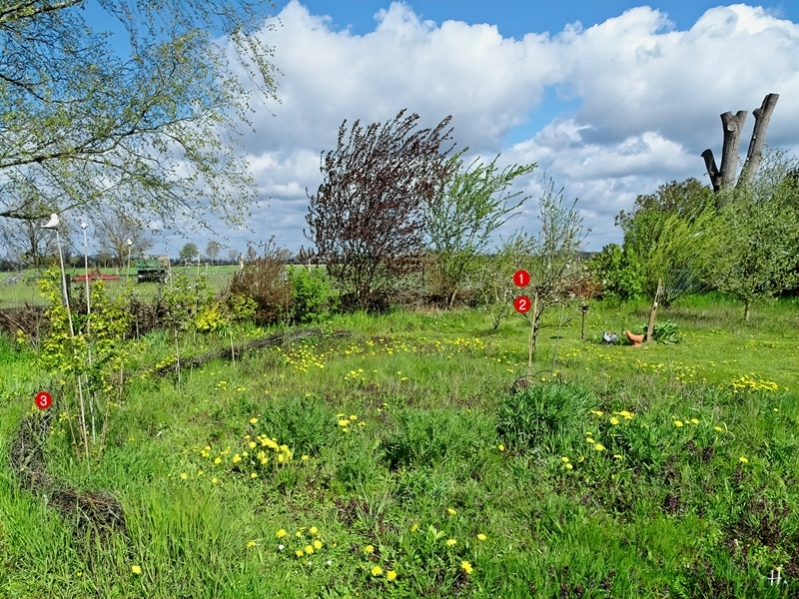 2021-05-06 LüchowSss Garten Rundgang m. Totholzhecken + kleinem Wall m. nummerierten Weinbergschneckenplätzen 1-3