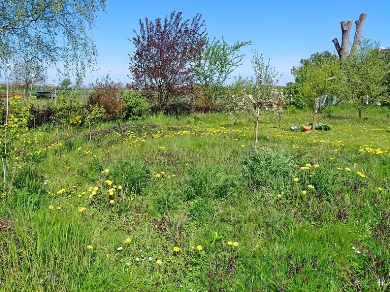 2021-05-09 LüchowSss Garten Rundgang m. Wieseninseln (2)