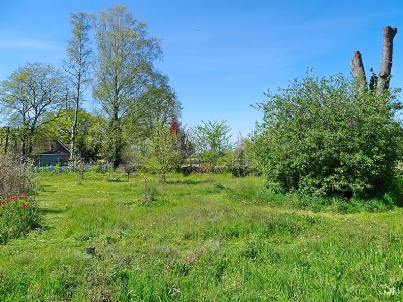2021-05-09 LüchowSss Garten Rundgang m. Wieseninseln (3)