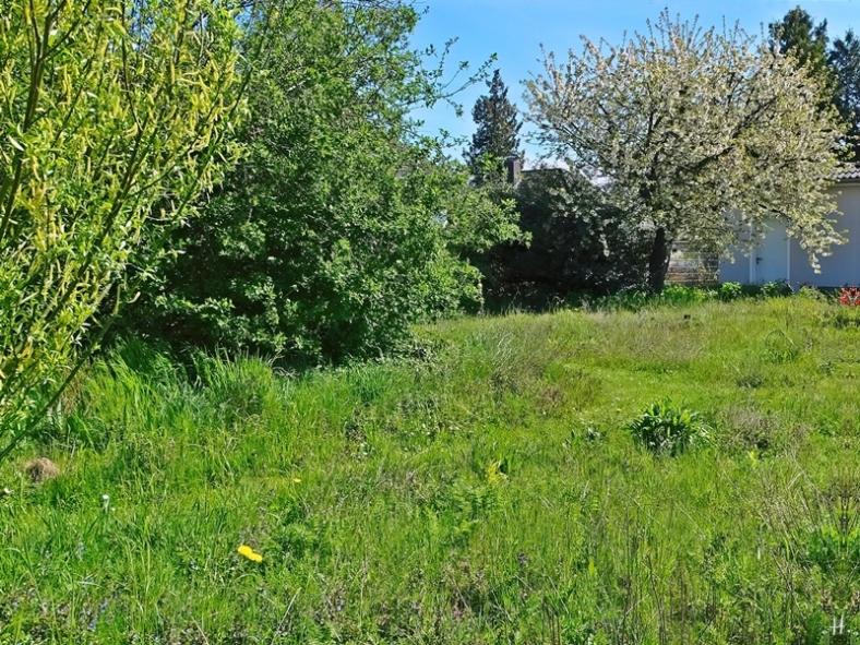 2021-05-09 LüchowSss Garten Rundgang m. Wieseninseln (4)