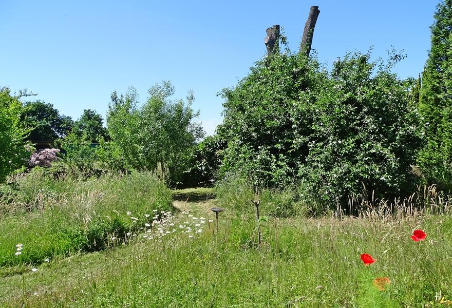 2021-06-14 LüchowSss Garten Rundgang + Wieseninseln + Bauernjasmin
