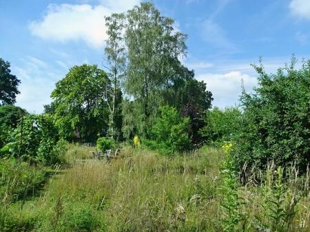 2021-07-05 LüchowSss Garten Blick über die Wieseninseln mit Birken