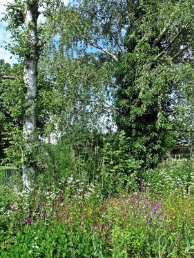 2021-07-05 LüchowSss Garten unter den Birken