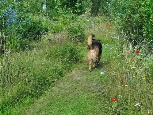 2021-07-05 LüchowSss Garten Wieseninseln + Bongo