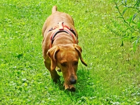 2021-07-21 LüchowSss Garten MAXI auf Schnupperkurs - 2tes Mal frei (5)