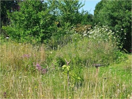 2021-07-18 LüchowSss Garten Wieseninseln, bunt (2)