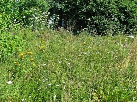 2021-07-18 LüchowSss Garten Wieseninseln, bunt (3)