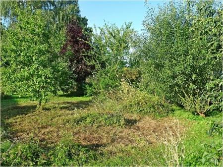 2021-08-24 LüchowSss Garten Wieseninsel, teilweise gemäht (1)