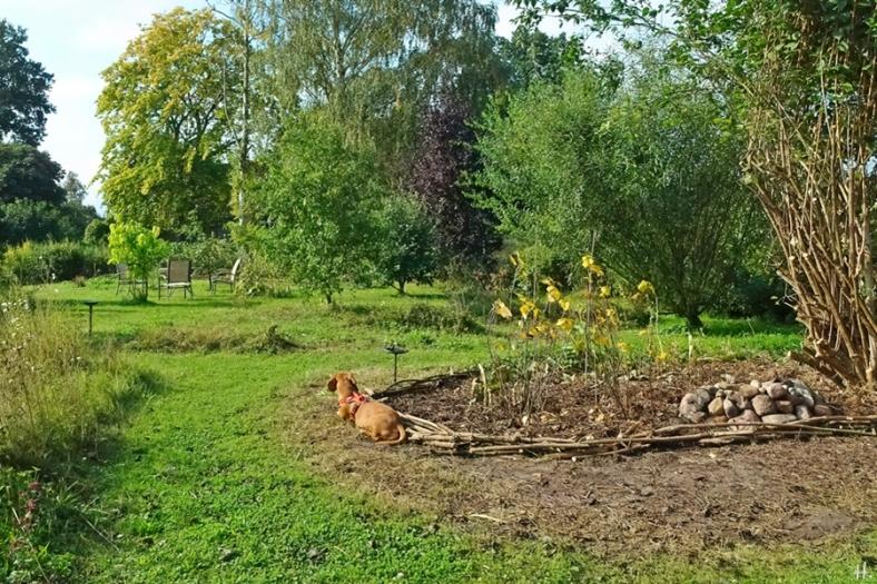 2021-09-11 LüchowSss Garten Maxi + neues altes Beet + Bauernjasmin – Europäischer Pfeifenstrauch (Philadelphus coronarius) (2)