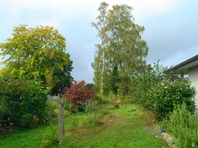 2021-09-11 LüchowSss Garten mit Birken + Blut-Hartriegel + Garteneibisch + Schmetterlingsflieder + Wegwarte + Zaubernuss u.v.a.m